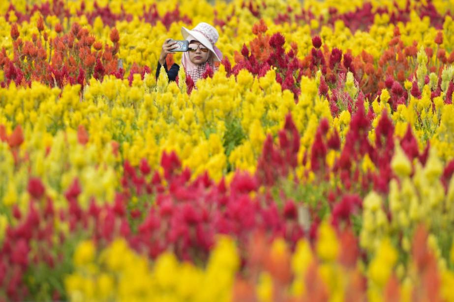 Une touriste prend un selfie dans un jardin... (Photo CHAIDEER MAHYUDDIN, AFP)