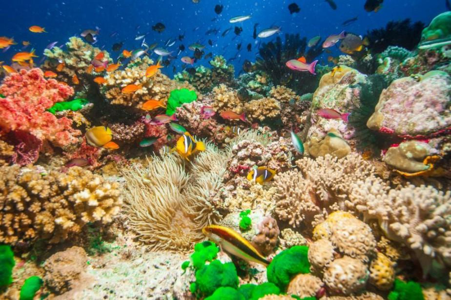 Une scène de Wonders of the Sea 3D,... (Photo fournie par TVA Films)