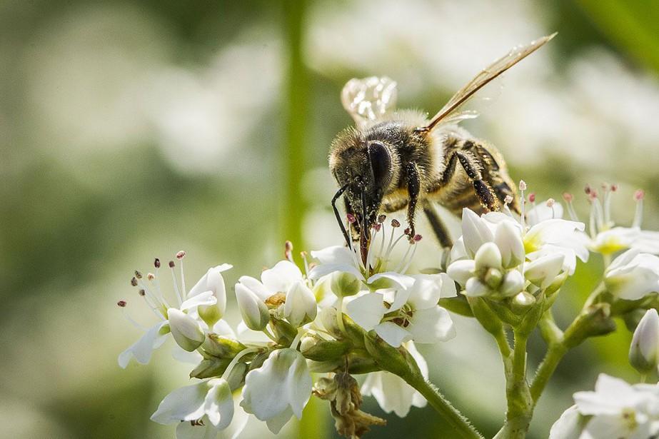 Déclin mondial sans précédent chez les insectes | Espèces menacées