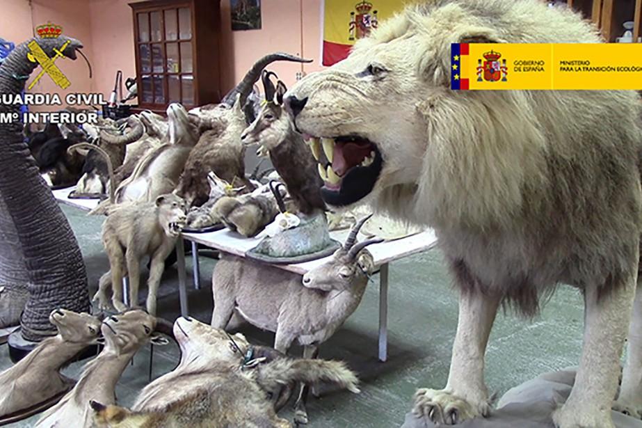 Les animaux empaillés ont été retrouvés dans un... (Image Agence France-Presse)