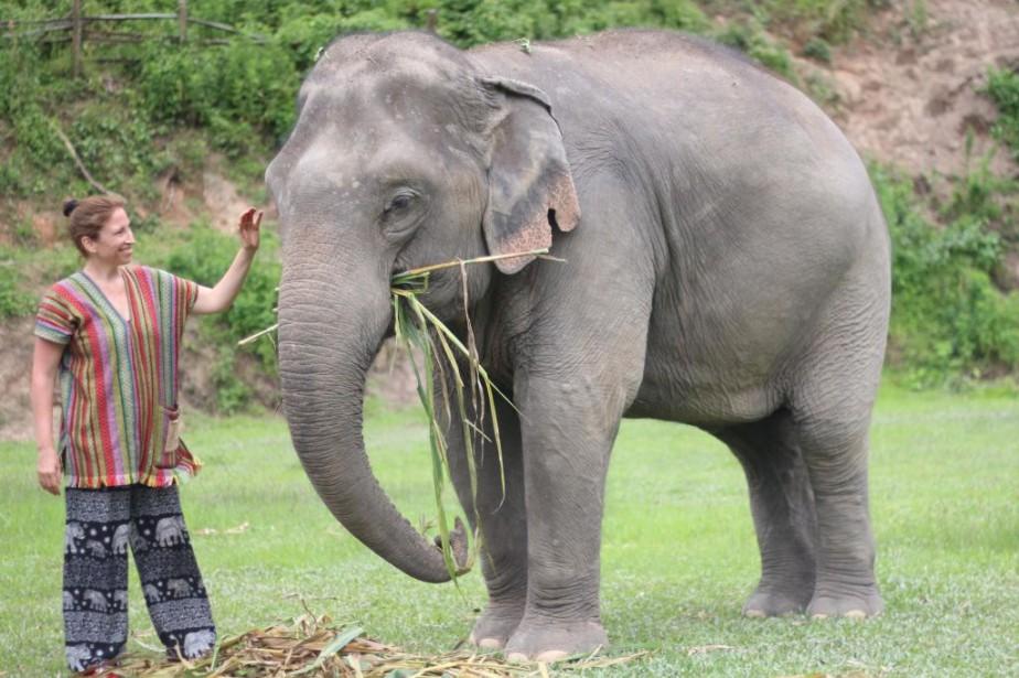 Éléphants Thaïlande Éthiquement Les En Rencontrer 8wmNn0