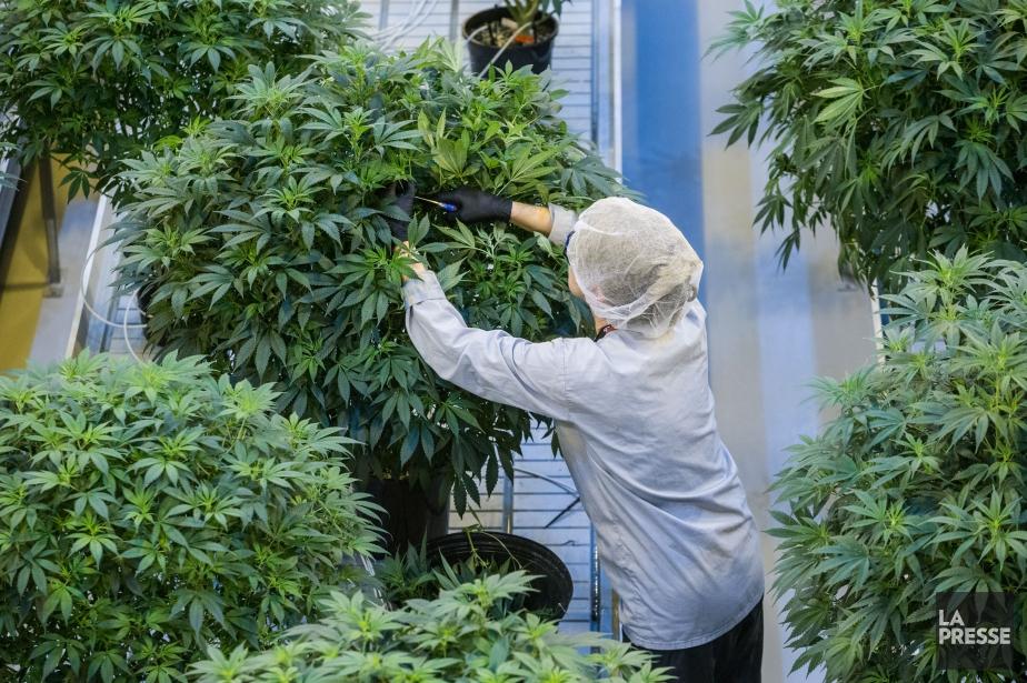 Usine ontarienne appartenant à Canopy Growth.... (Photo MARTIN TREMBLAY, archives La Presse)