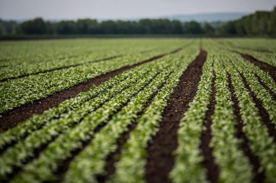 Depuis plusieurs mois, l'UPA propose un «plan vert»... (PHOTO OLIVIER PONTBRIAND, archives LA PRESSE)