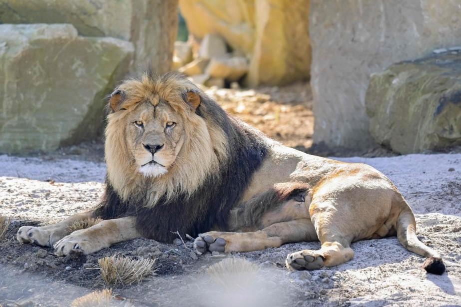 La présence des deux animaux suscitait une vive... (PHOTO UWE ANSPACH, AGENCE FRANCE-PRESSE)