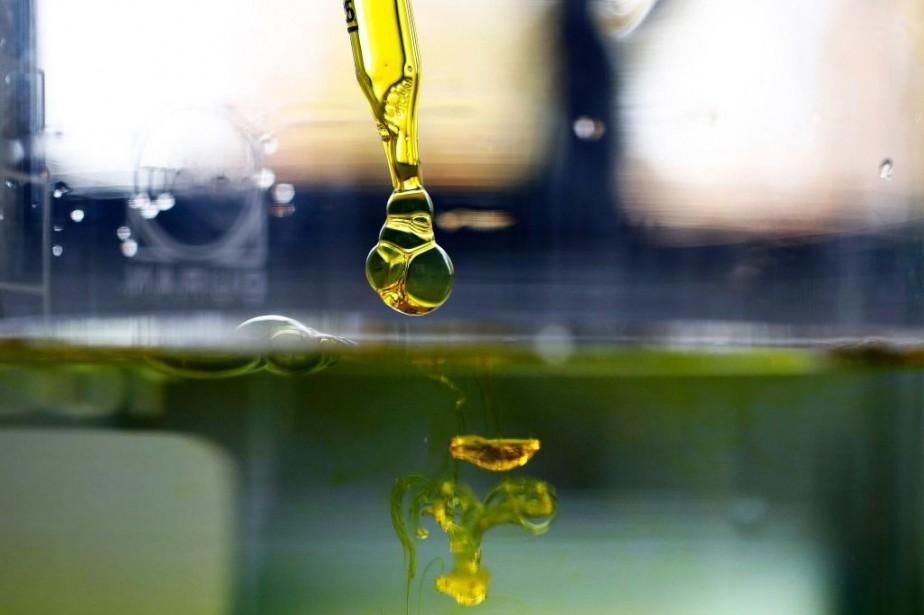 Échantillon decannabidiol soluble dans l'eau. Une centaine de... (PHOTO STEFAN WERMUTH, ARCHIVES BLOOMBERG)