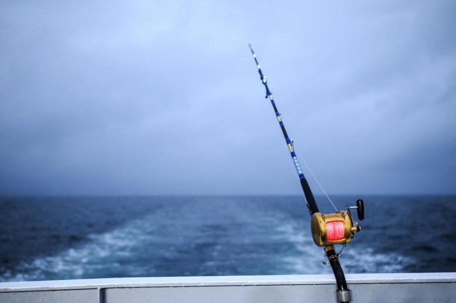 Les stocks de poissons ont augmenté de 14%... (PHOTO EDOUARD PLANTE-FRÉCHETTE, ARCHIVES LA PRESSE)