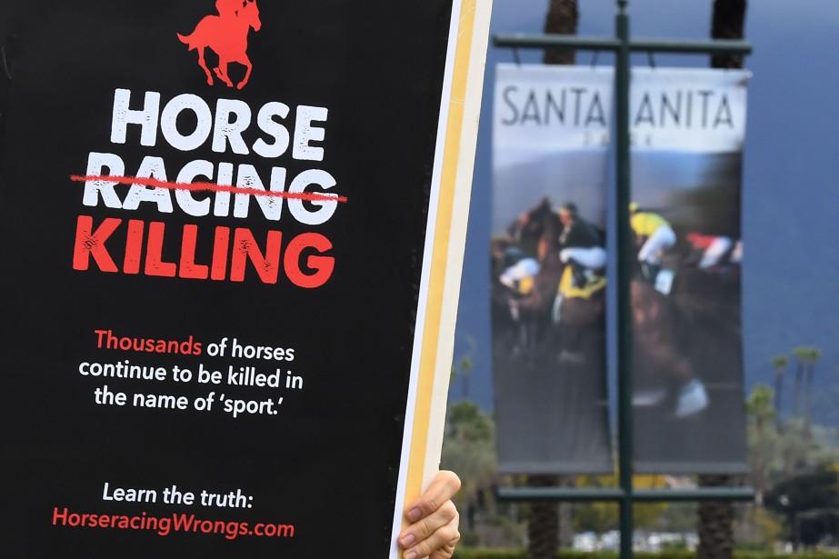 Selon la Commission californienne, 50 chevaux ont trouvé... (PHOTO AFP)