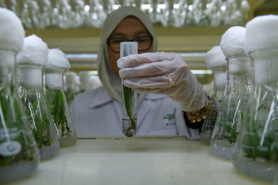 Dans son laboratoire de Bangi, près de la... (PHOTO MOHD RASFAN, ARCHIVES AFP)