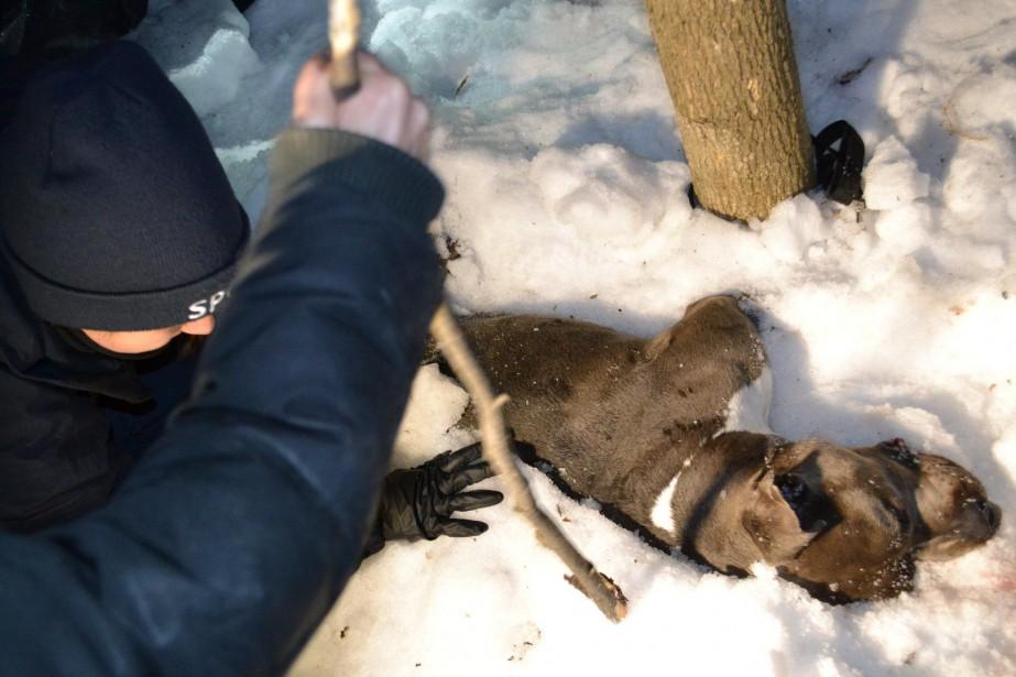 Le cadavre de l'animal était enseveli dans la... (PHOTO TIRÉE DE LA PAGE FACEBOOK DE LA SPCA DE MONTRÉAL)