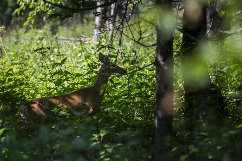 Un groupe de six chasseurs... (PHOTO OLIVIER PONTBRIAND, ARCHIVES LA PRESSE)