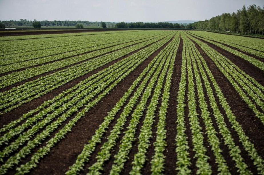 L'agriculture québécoise utilise-t-elle trop de pesticides?... (PHOTO OLIVIER PONTBRIAND, ARCHIVES LA PRESSE)