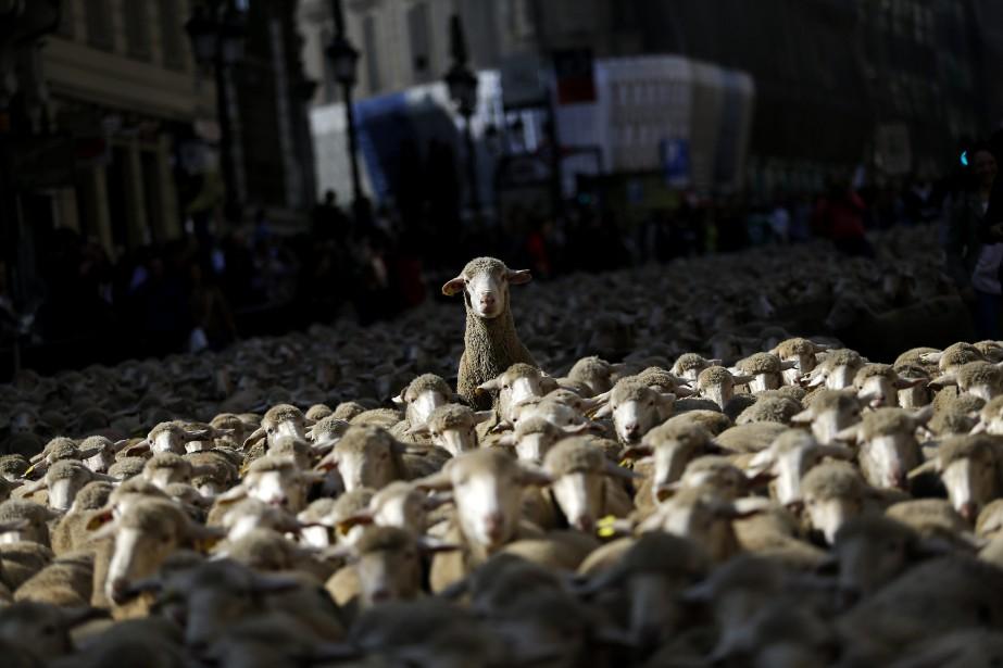 Le décret flamand est contesté par plusieurs organisations... (PHOTO AP)