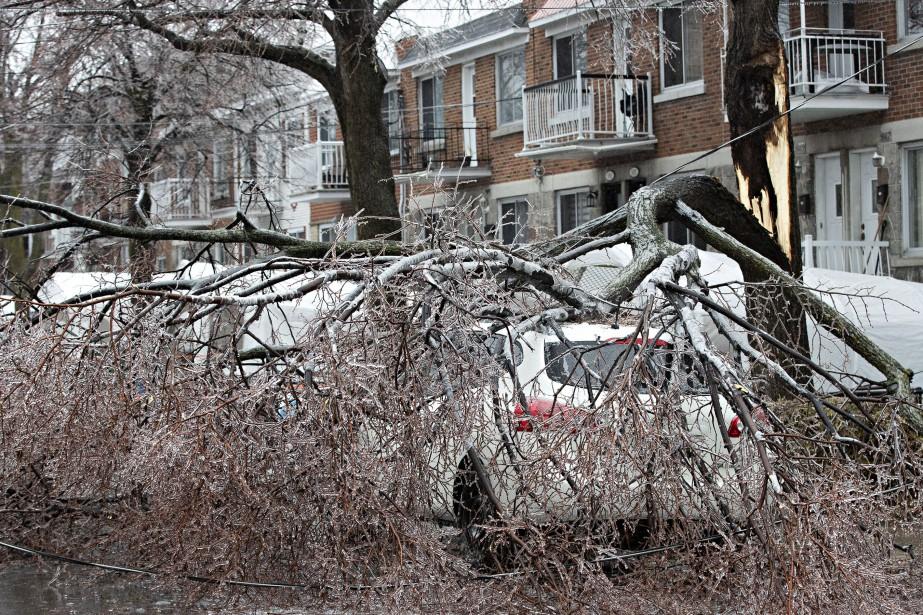 Un arbre est tombé sur une voiture à... (PHOTO PATRICK SANFAÇON, LA PRESSE)
