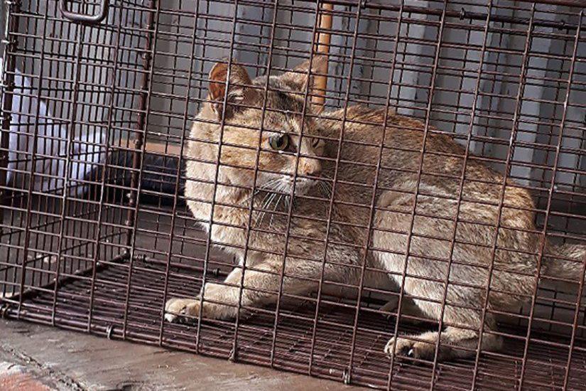 Une chatte tigrée au pelage orange a probablement... (PHOTO LA PRESSE CANADIENNE)