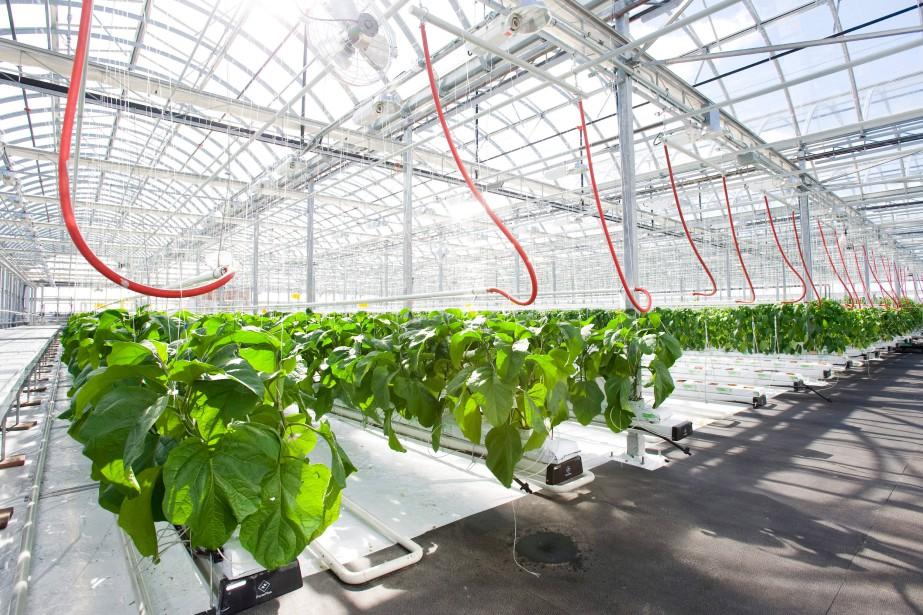 L'agriculture urbaine prend sa place à Montréal