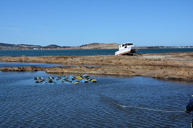 Avant d'utiliser leurs nouvelles cages, les pêcheurs les laissent tremper dans la baie, pour enlever l'odeur du bois qui pourrait repousser les homards. ()